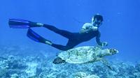 Cpdk snorkel guide identifies sea turtle