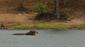 42 hippo am chobe