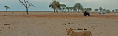 7 marabou waterhole crw 5469