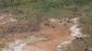 18 elefanten von oben crw 5989