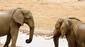 42 elefanten gucken sich an