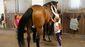 Pferdehoflinie112017dk0037
