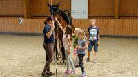 Pferdehoflinie112017dk0200