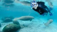 Manatee swim 3