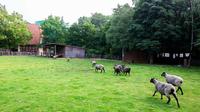 Guten morgen zoo