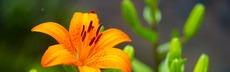 Flowers 3469927 1920
