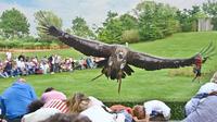 Foto vogelpark  tiefflug eines weirckengeiers in der flugshow adler  eulen und co