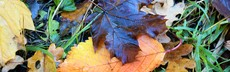 Herbstblatt 3 21.10.18