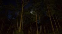 Abend aufnahme von unten baume 698388