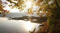 Stechlinsee
